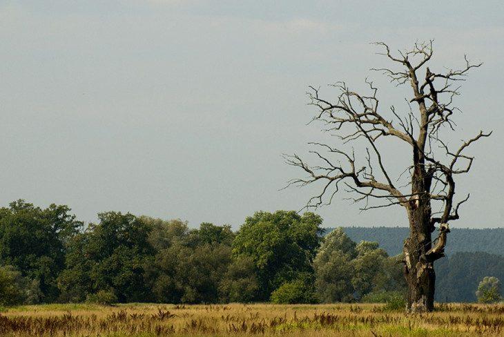 ...drzewa umierają stojąc...
